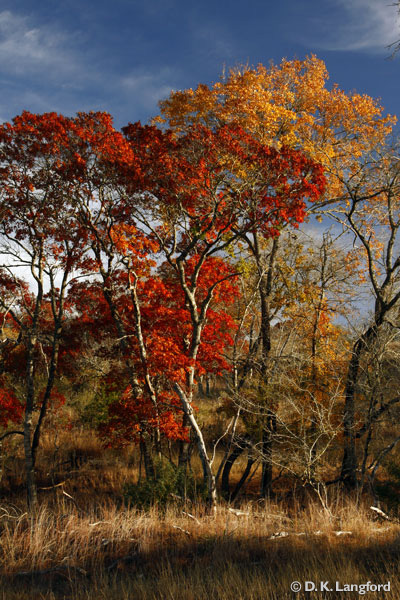 Fall Color in the Texas Hill Country courtesy of David Langford