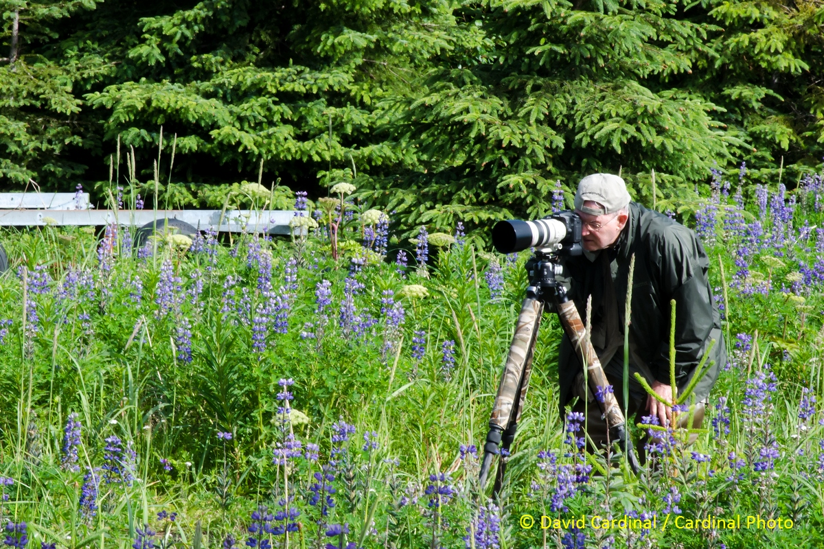 Our Alaska trip isn't just about bears and puffins. Here Dave R. is out making the most of a field of Lupins.