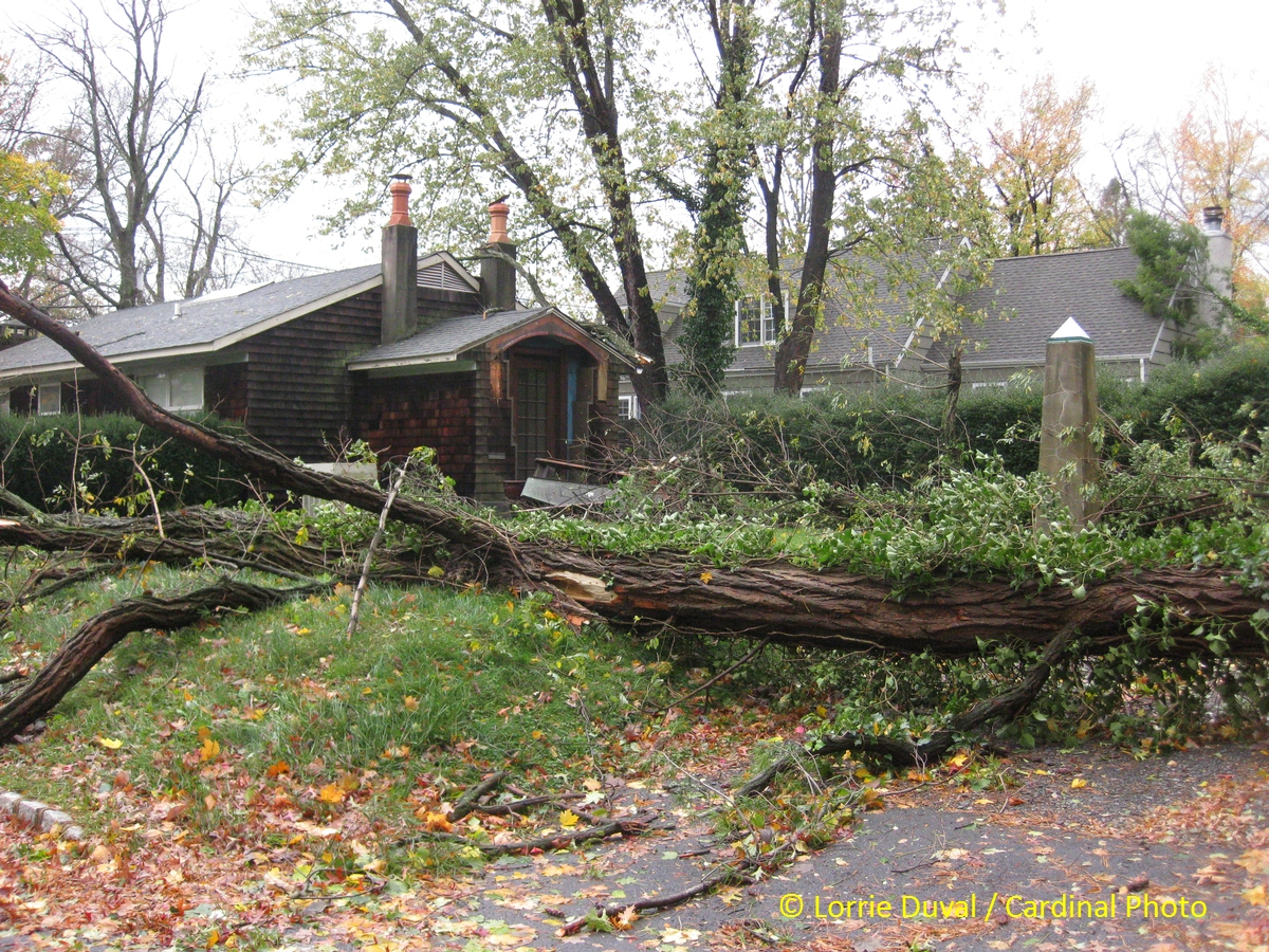 This house was the first one designed by a friend of ours. It survived with only minor damage, but many others were not so lucky.